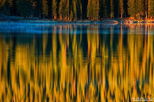 A Forest Reflection by kkart