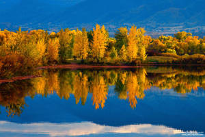 A Vivid Autumn by kkart