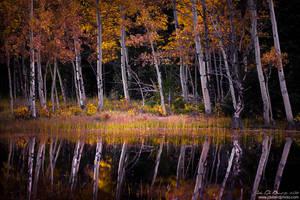Autumn's Dream by kkart
