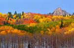 The Autumn Blanket by kkart