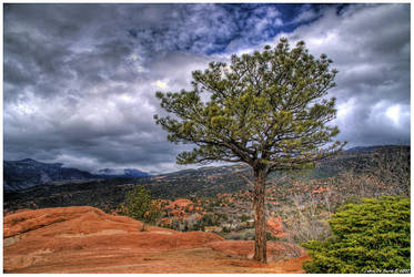 On One Tree Hill by kkart