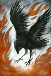 Black bird by MacGreen