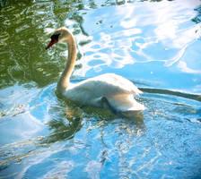 Swan Swim by MixedMilkChOcOlate