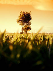 Grassessssss. by cro0w