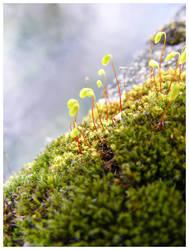 Micro Cosmos - Green by Morganenn
