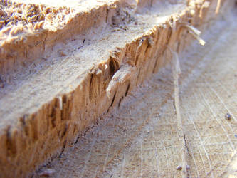 Wood II by Morganenn