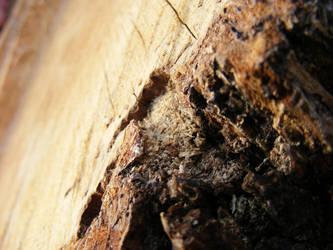 Wood III by Morganenn