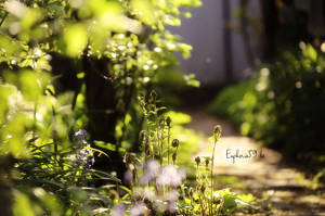 Jardin enchante 3 by Euphoria59