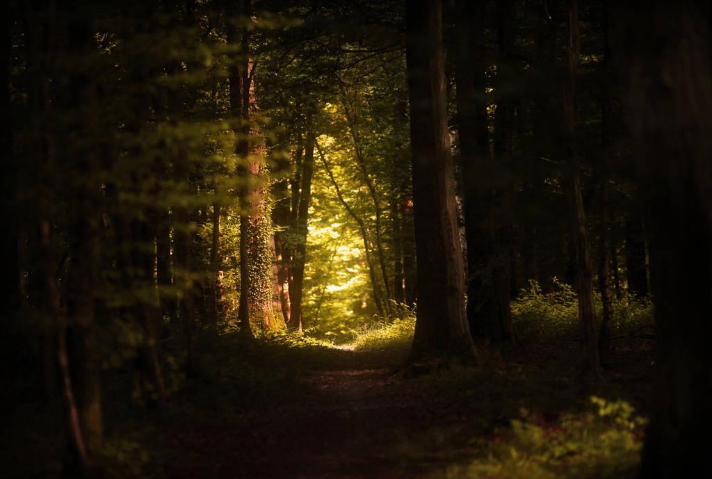 Le sentier perdu by Euphoria59