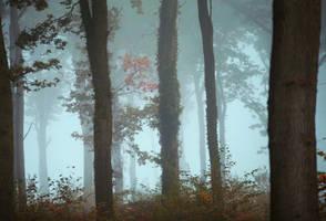 Brouillard 2 by Euphoria59