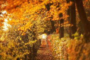 Vision d'Automne by Euphoria59