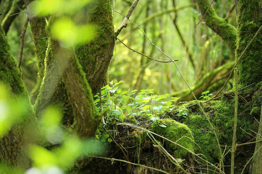 Pousses tronc by Euphoria59