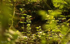 Plantes by Euphoria59