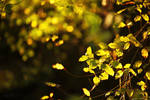 Feuilles dorees by Euphoria59