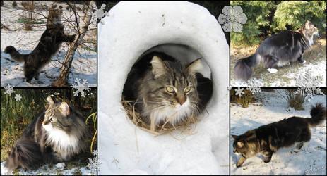Winter cat by PaulAdamus
