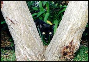 Hide and Seek by Ferriman