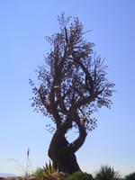 Valentine- The Spirit Tree by Valentine-FOV-Stock