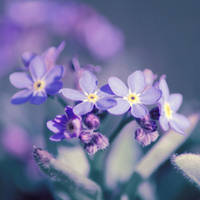 Forget-me-not by x-a-e