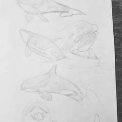 orca sketches  by AoiKita