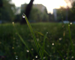 morning dew by kicsianna
