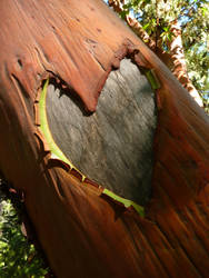 Heart of the Forest by BlueBoxDrifter