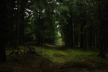 Enchanted woods by sahk99