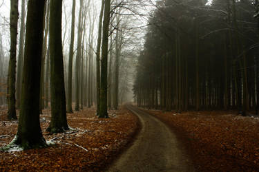 Morgens im Wald by sahk99