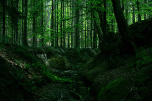 The woods of Fangorn by sahk99
