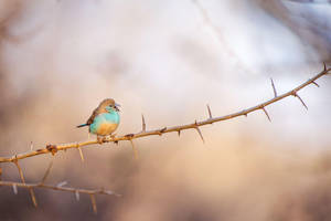 Yelling Bird by Feuillyien