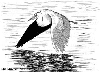Great Blue Heron- Ink by MrMinos