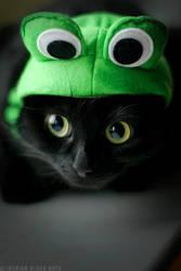 Onyx frog by ladymorgana