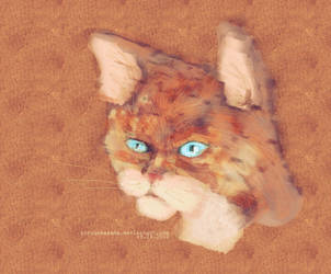 even a cat's eyes can squint by yunyunsarang