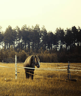 Emo horse is emo by yunyunsarang