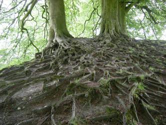 Tree roots, Avebury by VandrefalkForge
