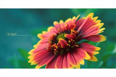Macro Flower by baheej