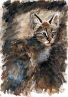 Barn Cat by CyanilurusJubatus
