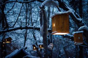 Winter evening by diacita