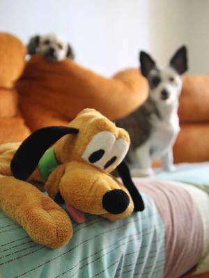 Odd dog by Kaslito