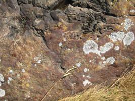 Rock surface 7 + grass by TextureCat