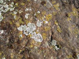 Rock surface 8 by TextureCat