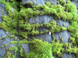 Moss 2 by TextureCat