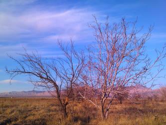 2 trees (2) by Arash0098