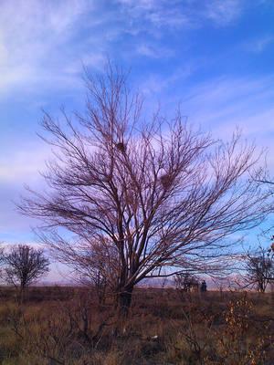 A tree and its neighbors !!! by Arash0098