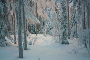 Snowy forest 7 by Esveeka-Stock