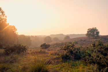 Veluwe 4 by Esveeka-Stock