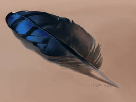 Color Study - Blue Jay Feather by LeccathuFurvicael