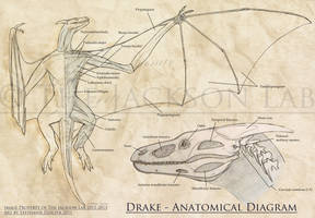 Surficial Muscular and Skull Anatomy of the Drake by LeccathuFurvicael