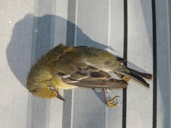 Bird 3 by Majikdragon