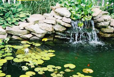 Cute Pond by Catt22489