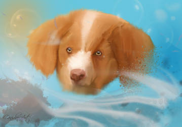Nova scotia duck tolling retriever puppy by Pireek